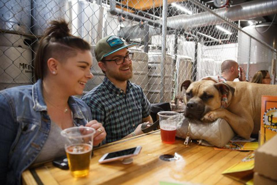 A dog sleeps at a table at Metazoan Brewing Co.'s indianapolis tasting room.
