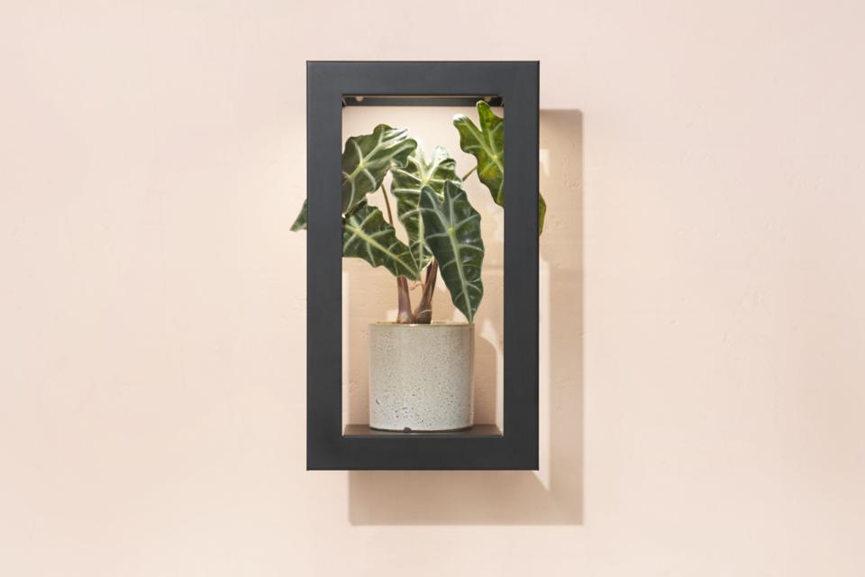 Modern Sprout Picture Frame
