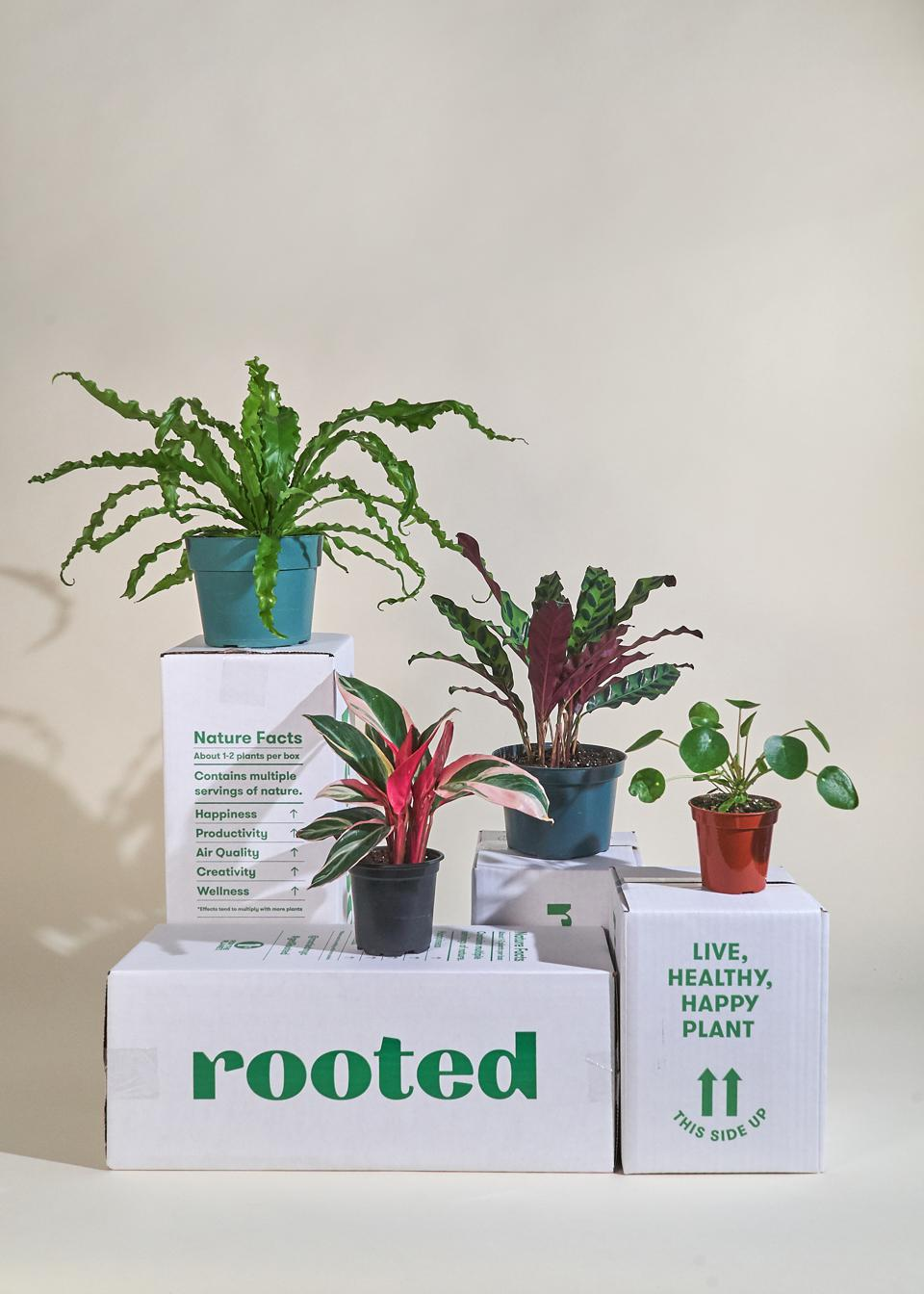 Rooted NYC Kit