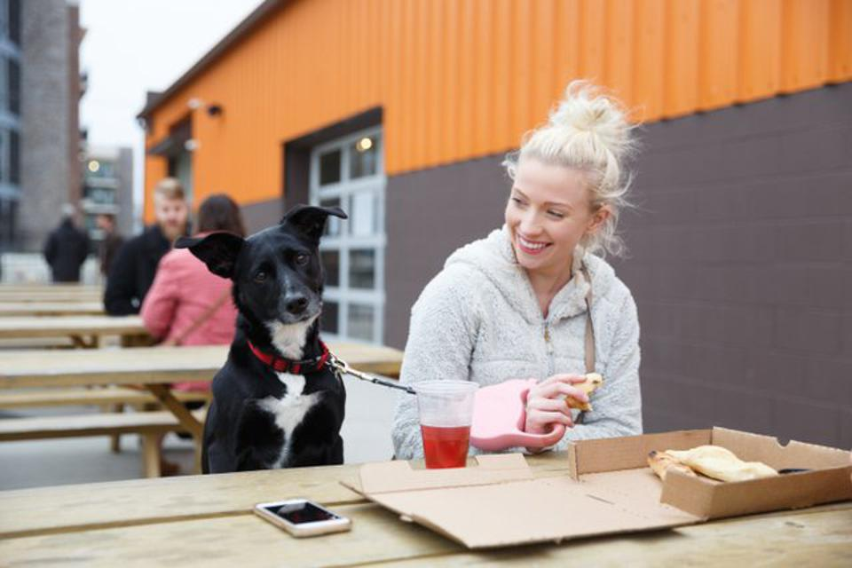 Dogs are welcome everywhere at Metazoa Brewing Co.