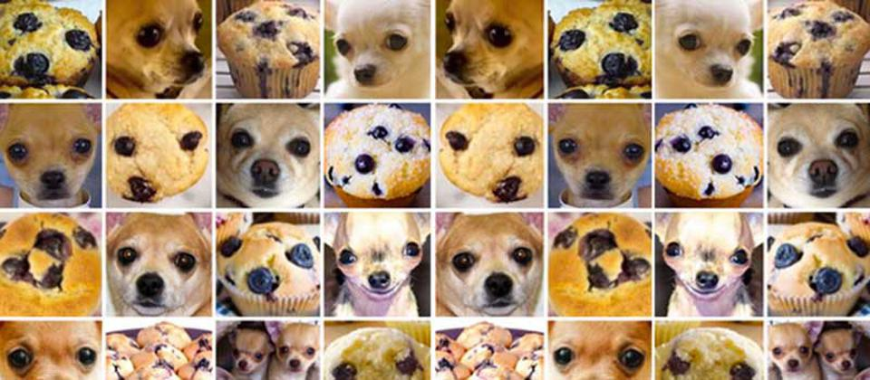 Rows of pictures of chihuahuas and muffins that bear a resemblance.