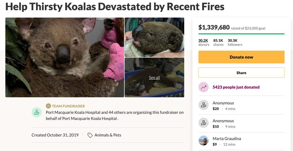 Go Fund Me for koala aid