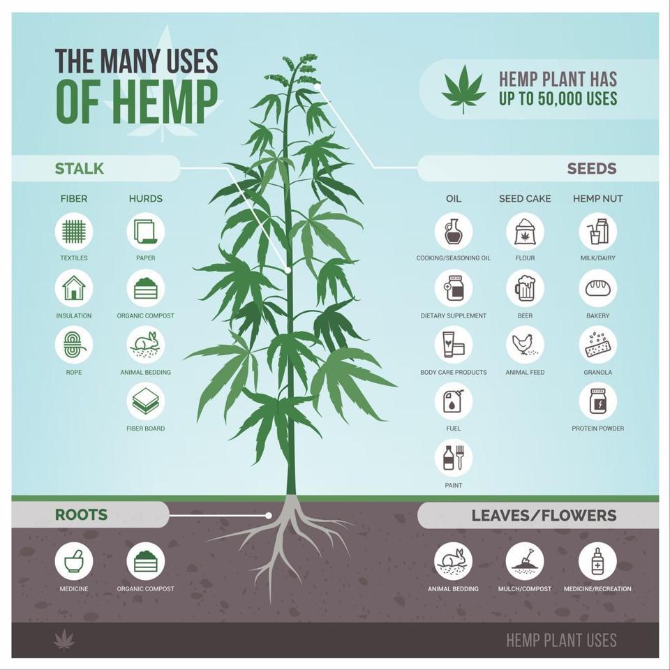 Hemp and Its Uses