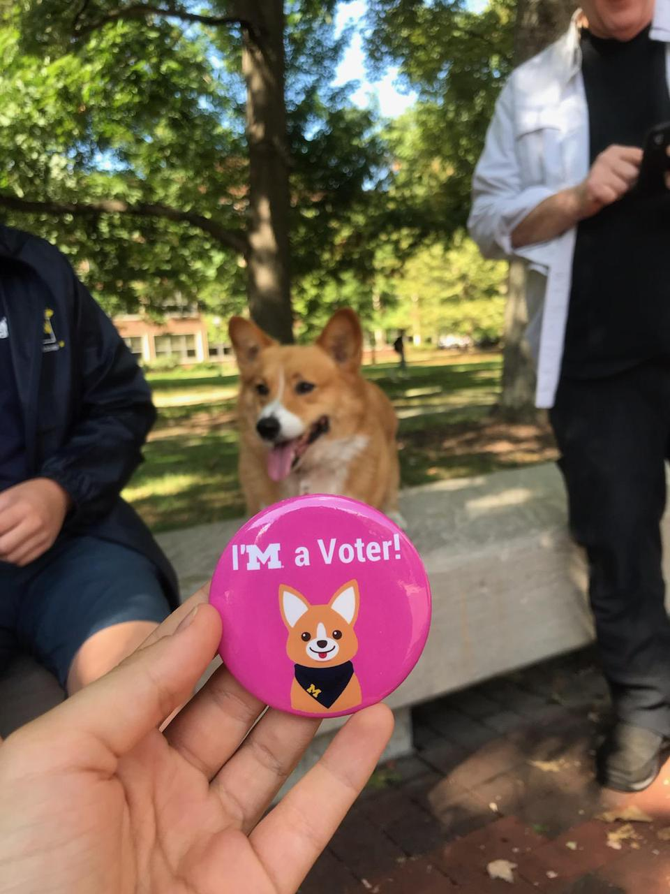 A corgi stands on a park bench with a pink ″I'm a voter″ pin.