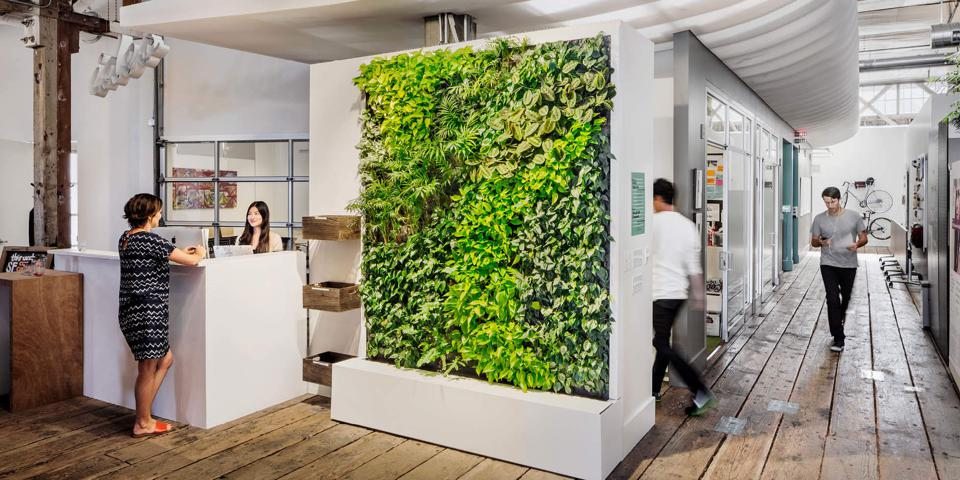 A living wall in IDEO's office
