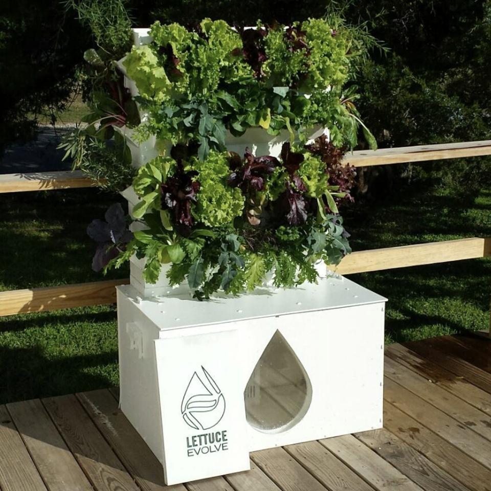 Lettuce Evolve vertical garden