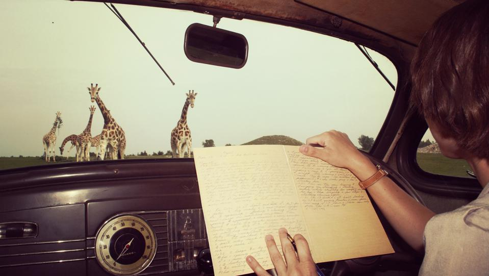 Young Anne Innis Dagg documenting Giraffes in Africa