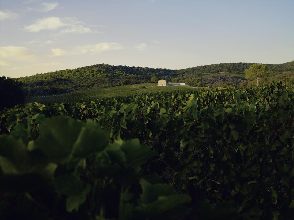 Masseto Estate