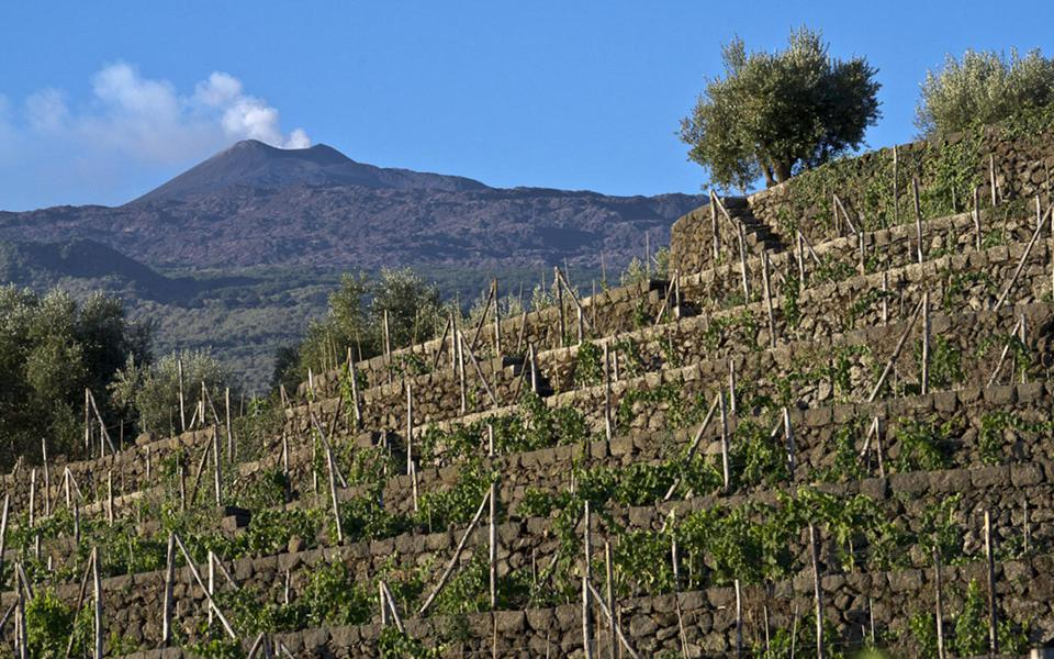 Terraced Vineyards at Tenuta Tascante
