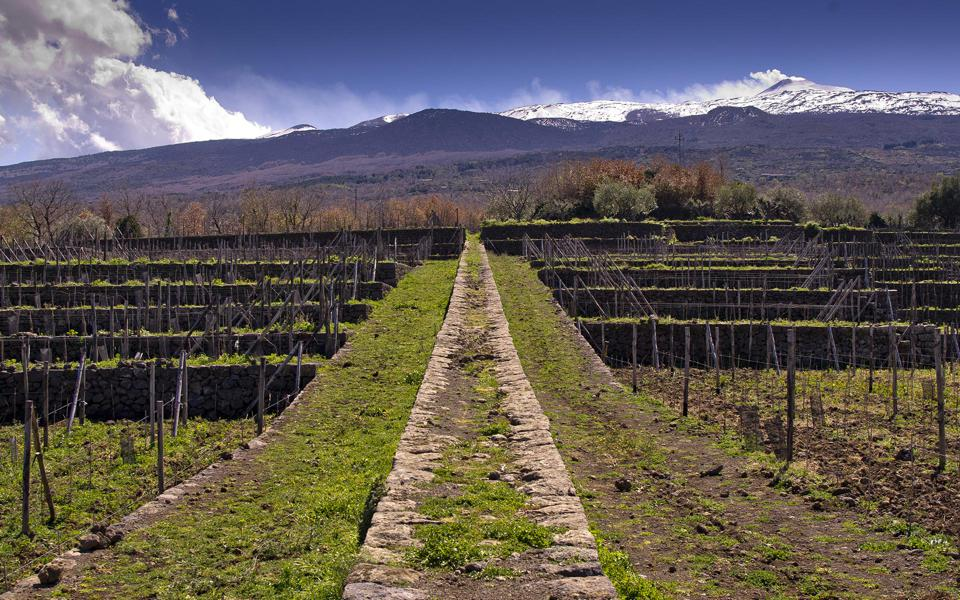 Etna Vineyards of Tenuta Tascante