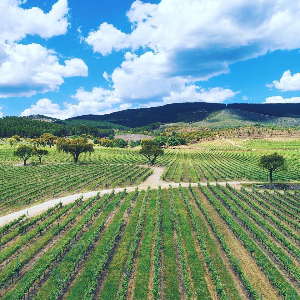 Vineyards at Quinta da Fonte Souto