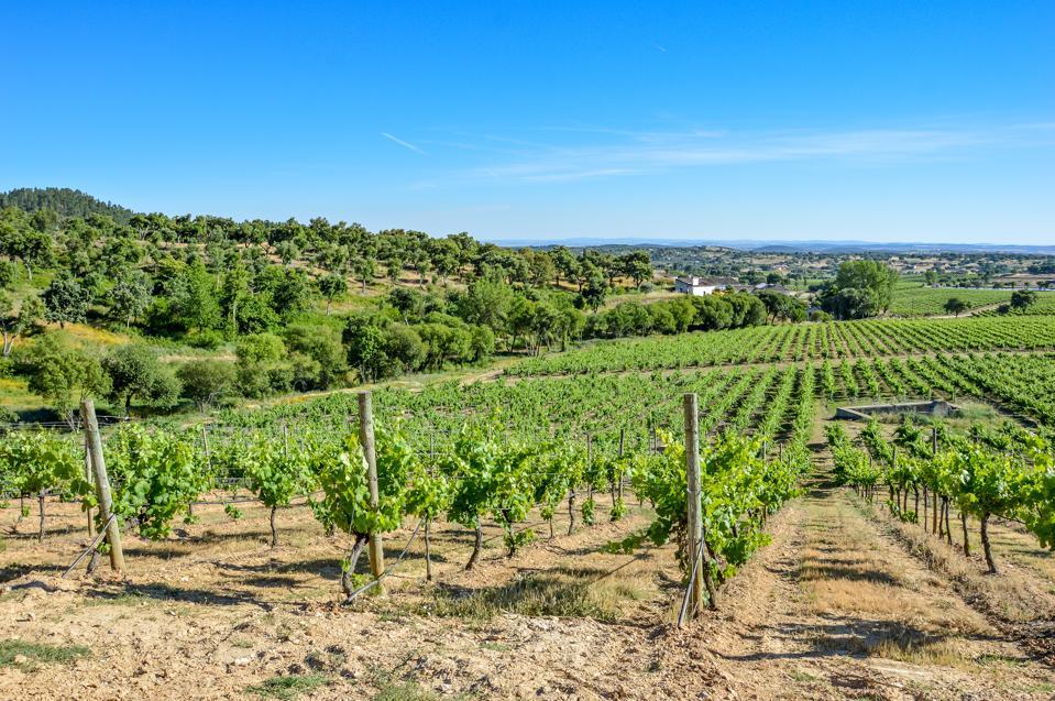Quinta da Fonte Souto Vineyards