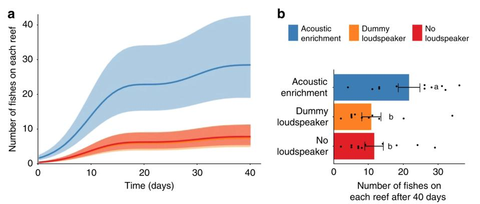 Effect of acoustic enrichment on coral reefs