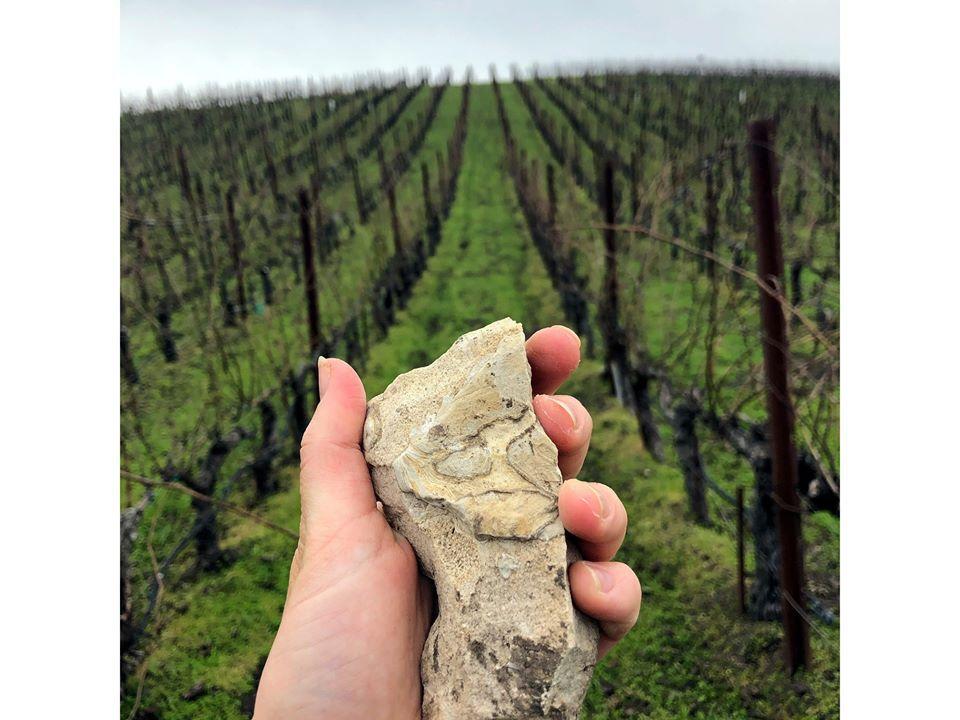 Calcareous Limestone at Tablas Creek Vineyard
