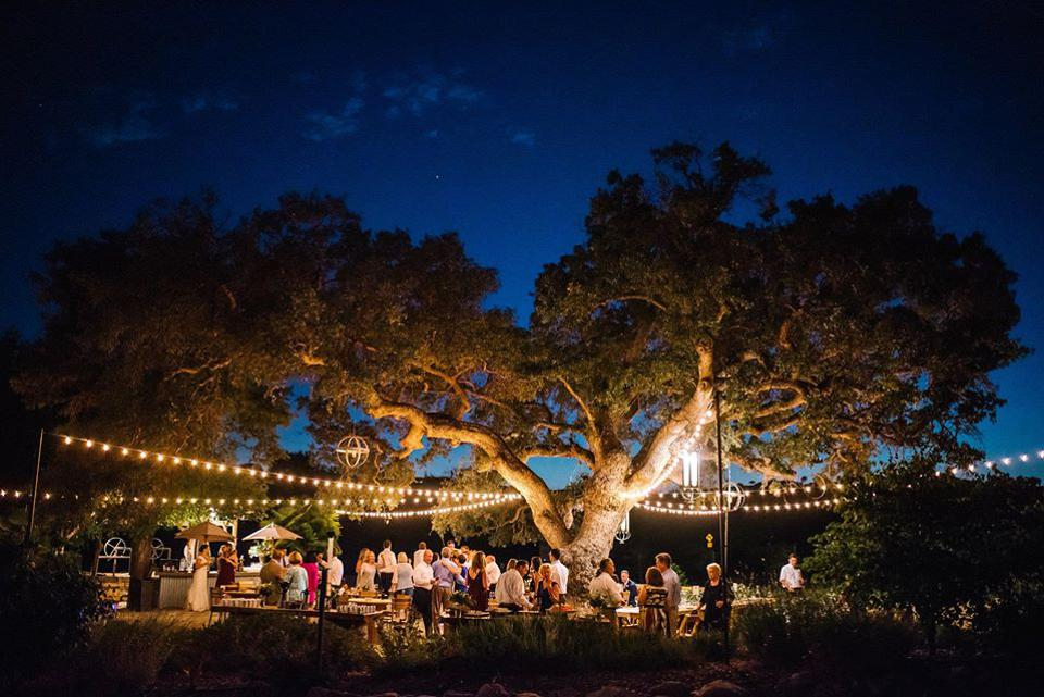 Cass Winery 200 Year Old Hybrid Oak Tree Adding Magic to an Event