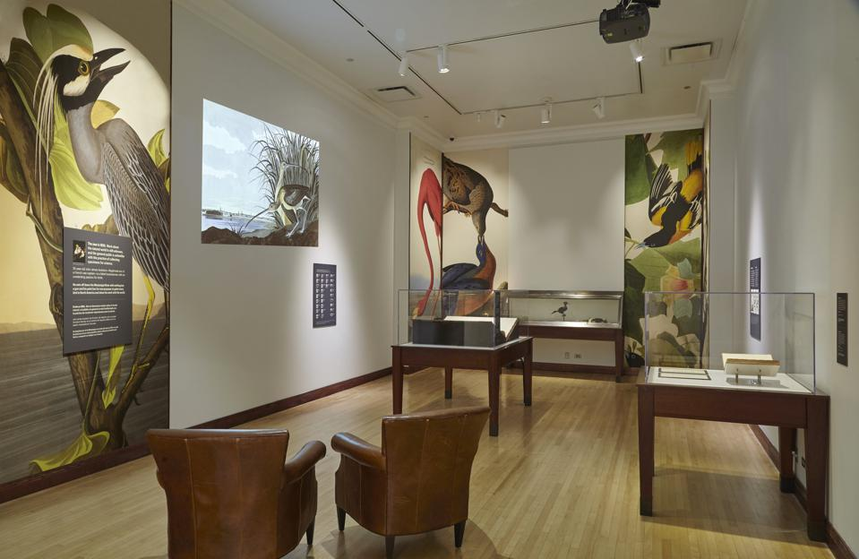 John James Audubon's 'Birds of America' on view now at the Field Museum in Chicago, installation view.