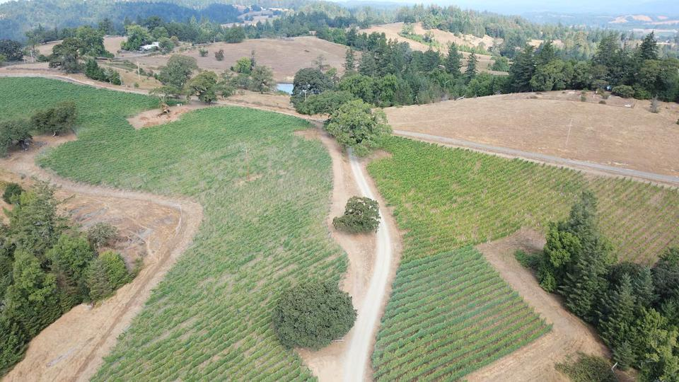 Chardonnay, Sonoma, California, Wine, Vineyard