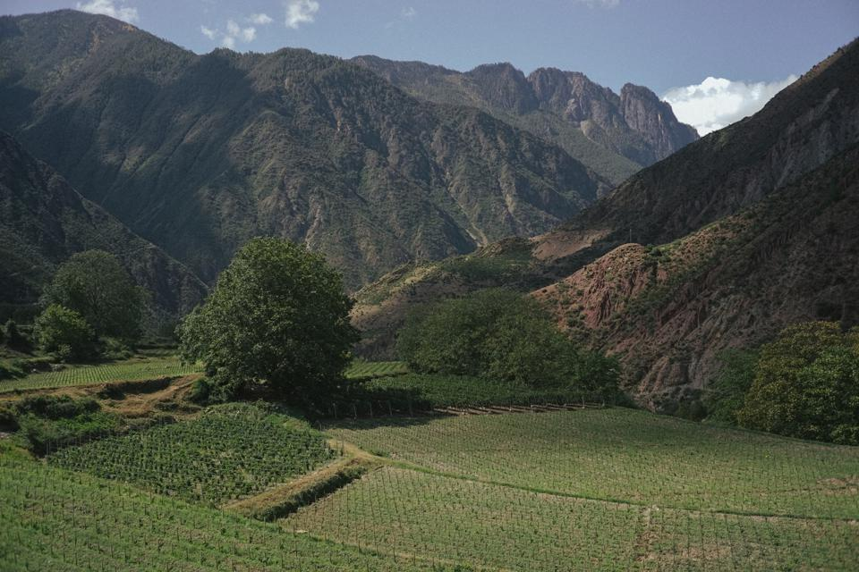 Are The Himalayas The Future Of Wine? Ao Yun Thinks Yes
