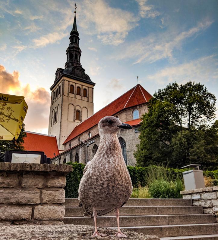 Tallinn City Walls (16 of 14)