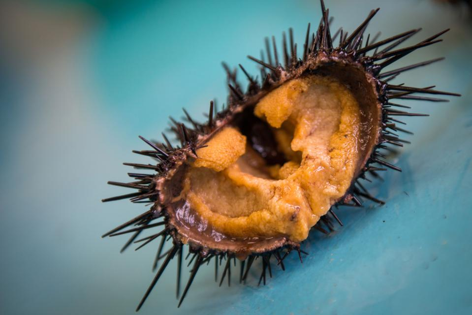Inside of a ranched purple urchin.