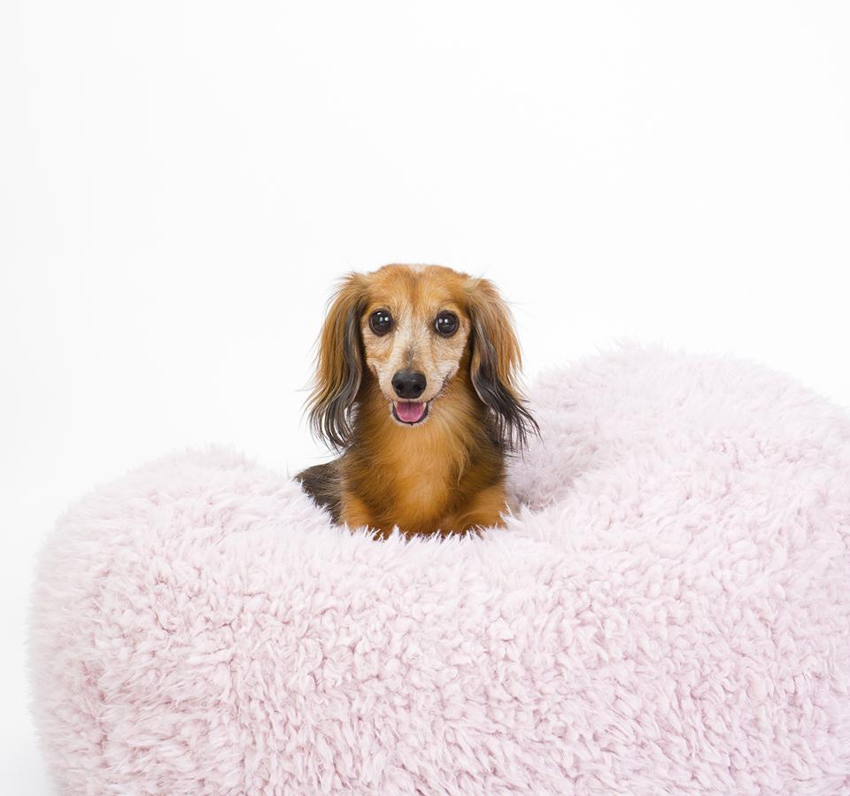 Blush Dog Pod from MODERNBEAST.