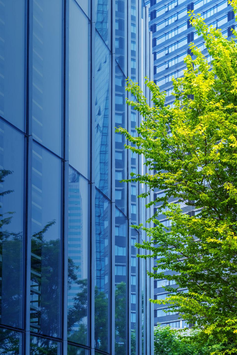 Office building and tree