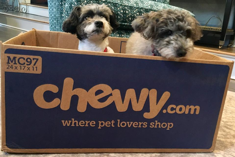 A picture of two cute dogs in a Chewy.com delivery box.