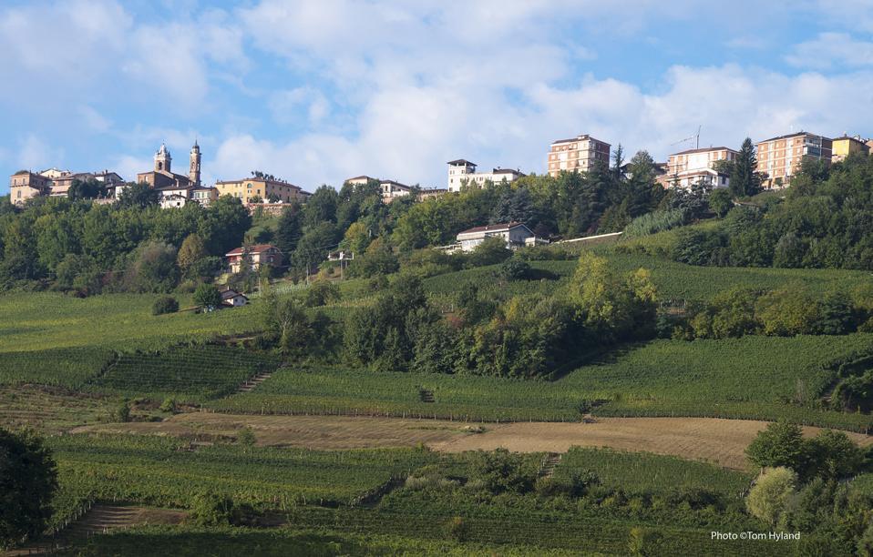 Oddero vineyards