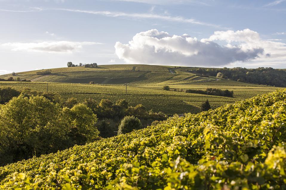 Jolivet vineyard