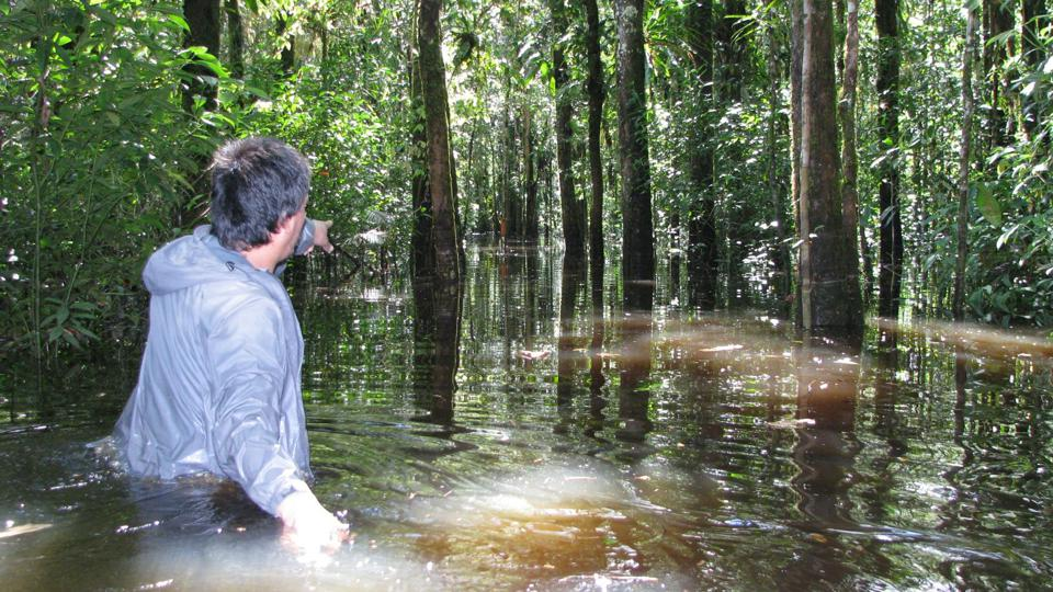 A ForestPlots collaborator wades through a flooded forest in Ecuador to record data