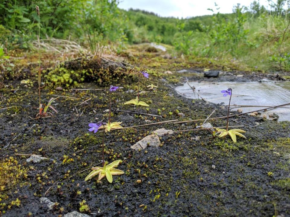 ecobot wetland
