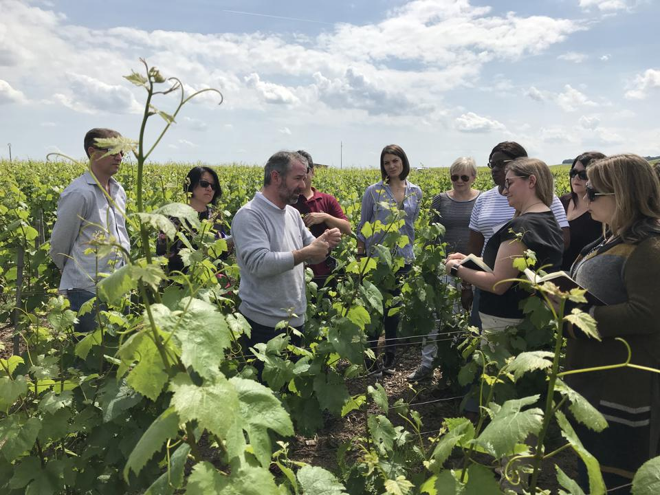 WSG Students in Vineyards of Champagne