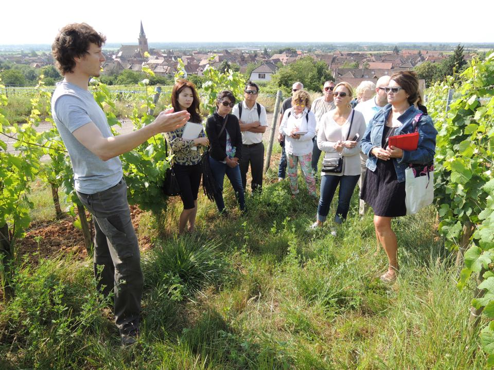 Vineyard visit with Mathieu Deiss of Domaine Marcel Deiss