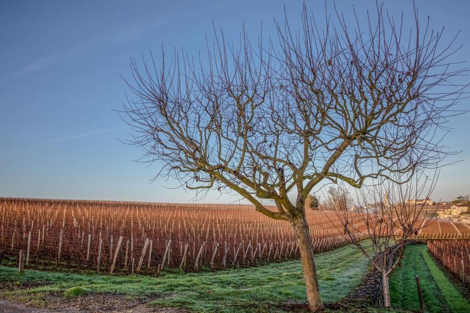 Vineyards During the Winter at Château Troplong Mondot