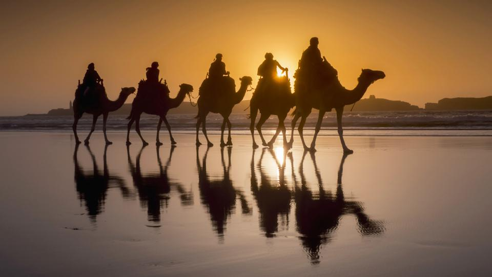 Sunset camel trek on the beach
