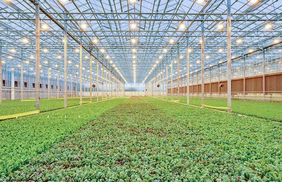 BrightFarms is an indoor farming company that grows salads in high-tech, computer controlled greenhouses