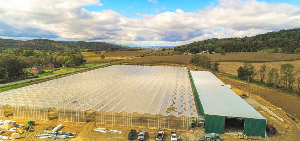 BrightFarms will open a new greenhouse in Selinsgrove, Pennsylvania, in early 2020