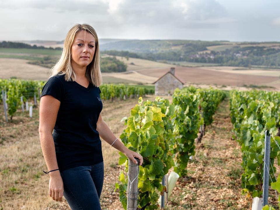 Chablis, vineyards, female winemakers, chardonnay