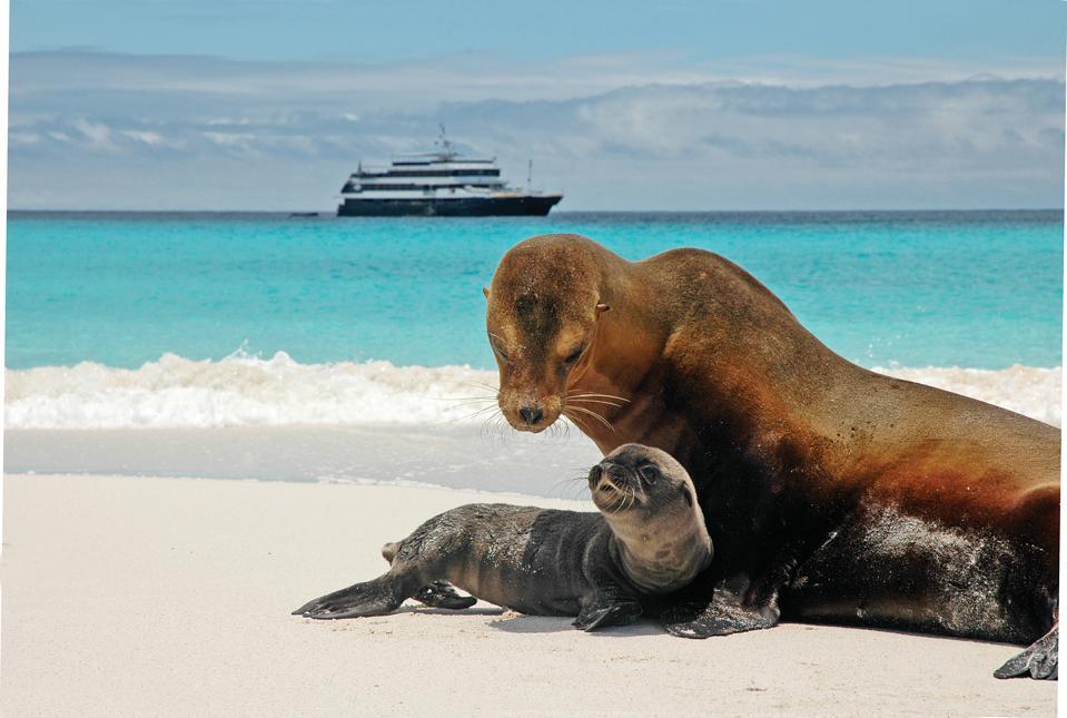 Galápagos Islands, Lindblad Expeditions