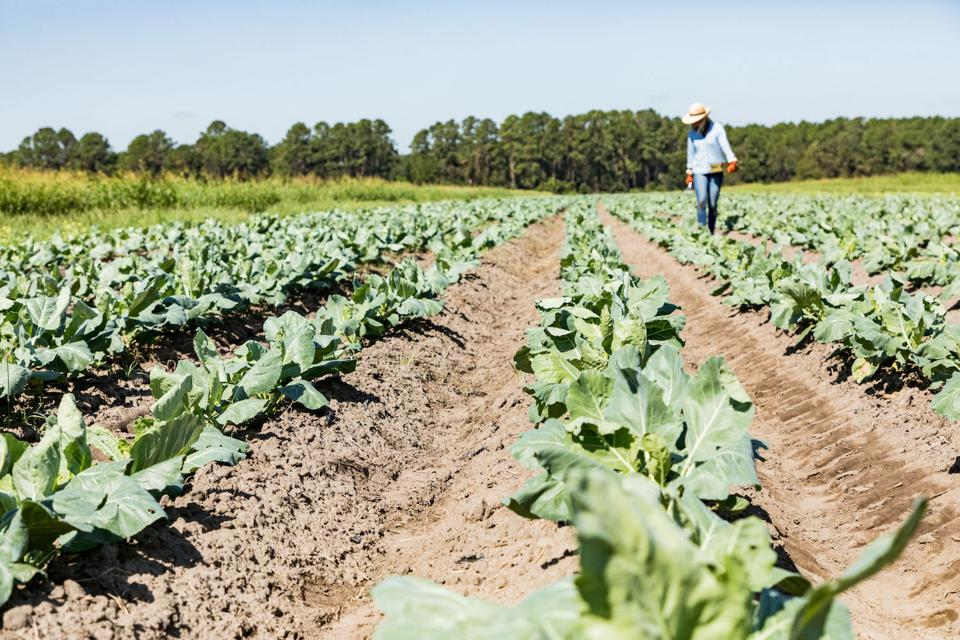 The Kiawah River community has a working farm that provides produce for its residents and beyond.