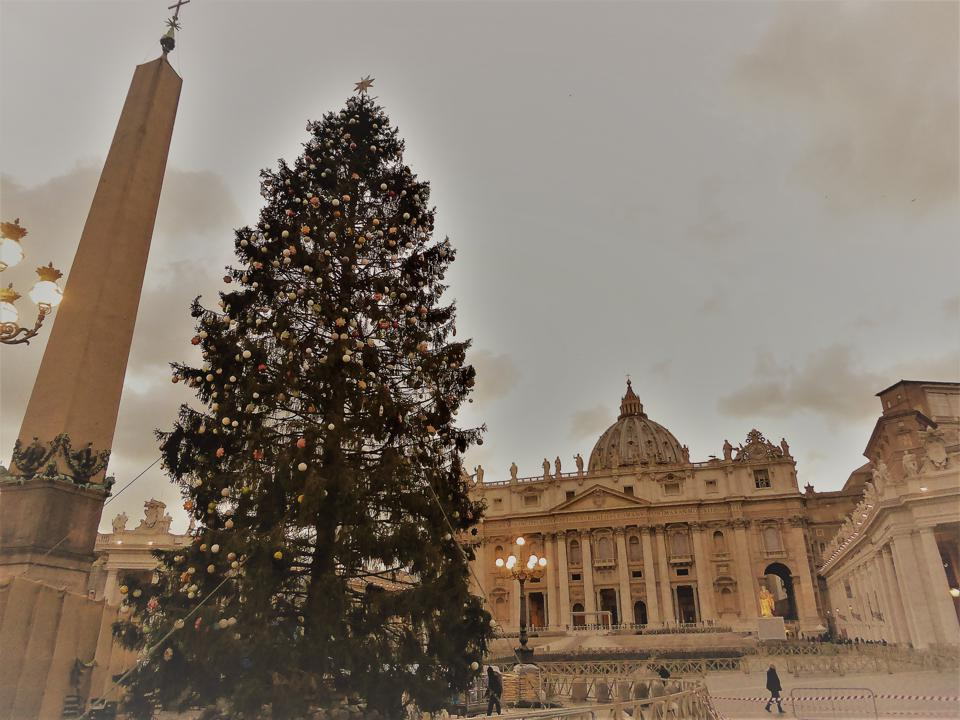 The Christmas tree in St. Peter's Square in December 2017