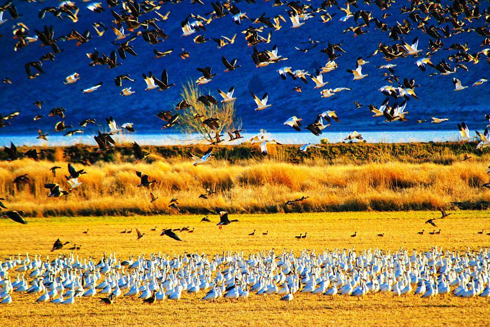 Winter Wings Festival