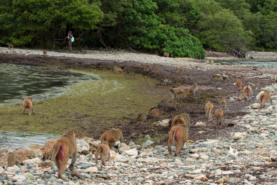 Monkey Island pre-hurricane damage