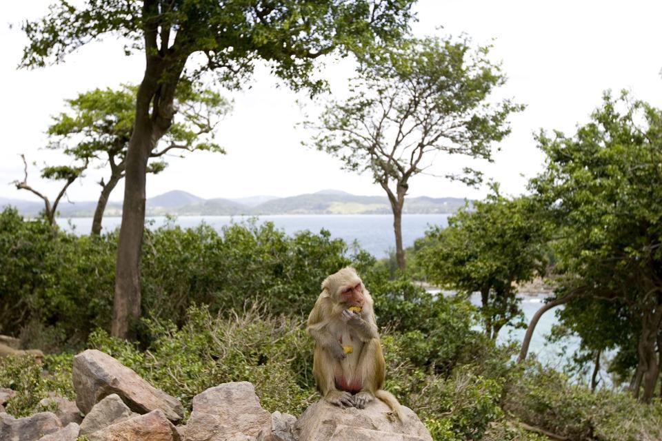 Monkey Island in Puerto Rico