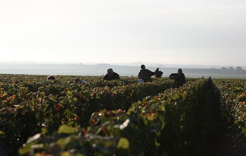 Known for their famous Cristal, Roederer is spearheading a movement for more sustainable agriculture in France's idyllic Champagne region.
