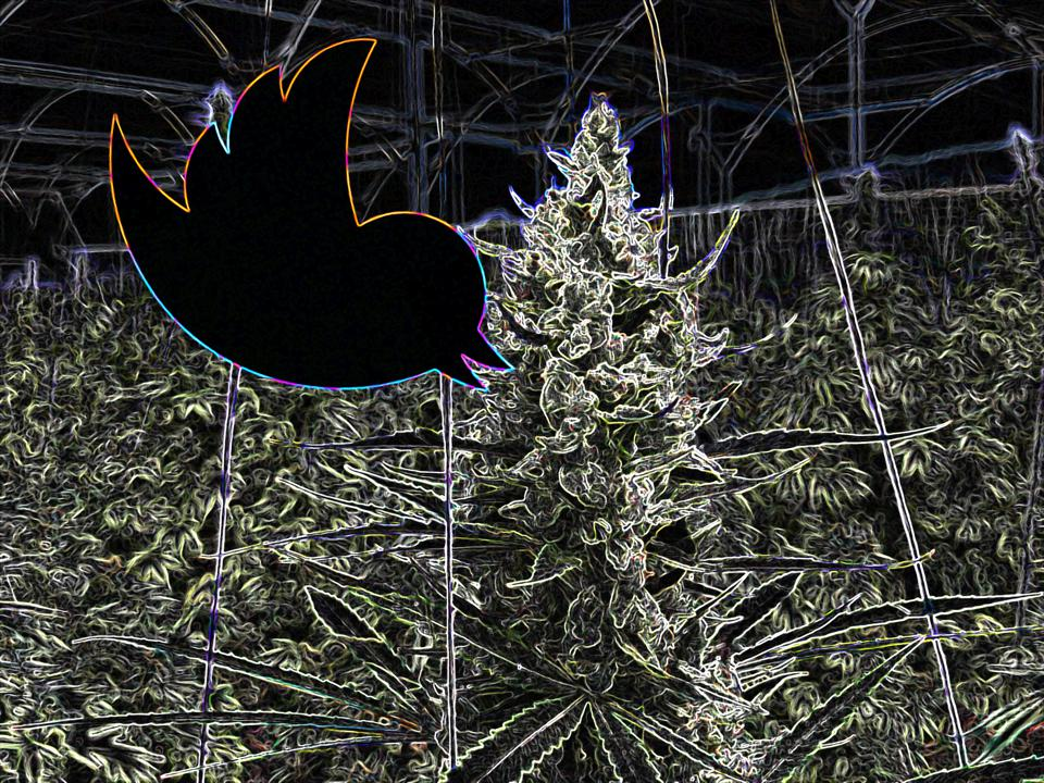 Weed On Twitter