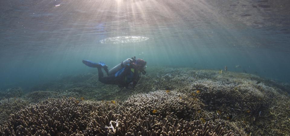 Anna Oposa Diving at a marine sanctuary.
