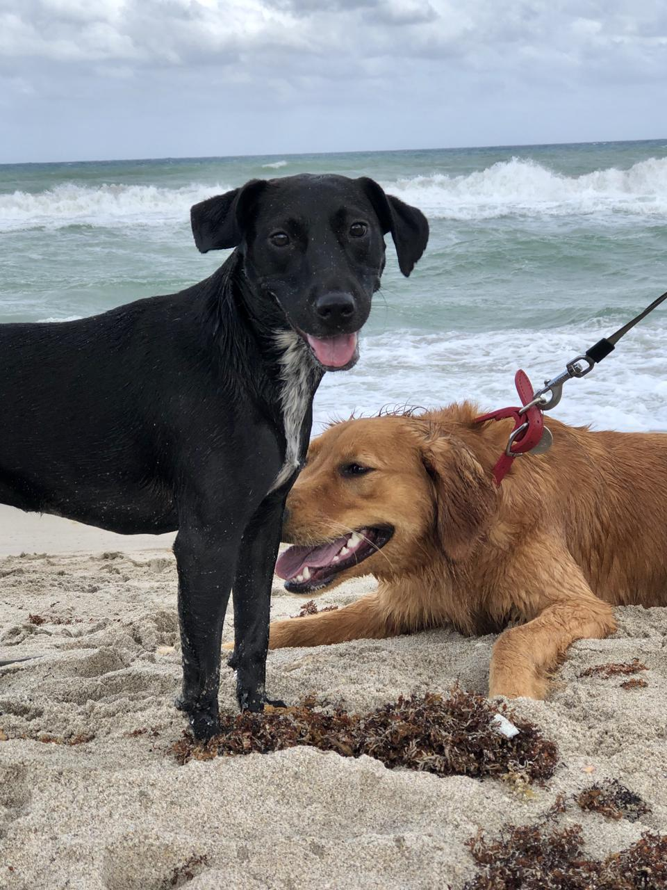 Olive and her friend at Bark Beach