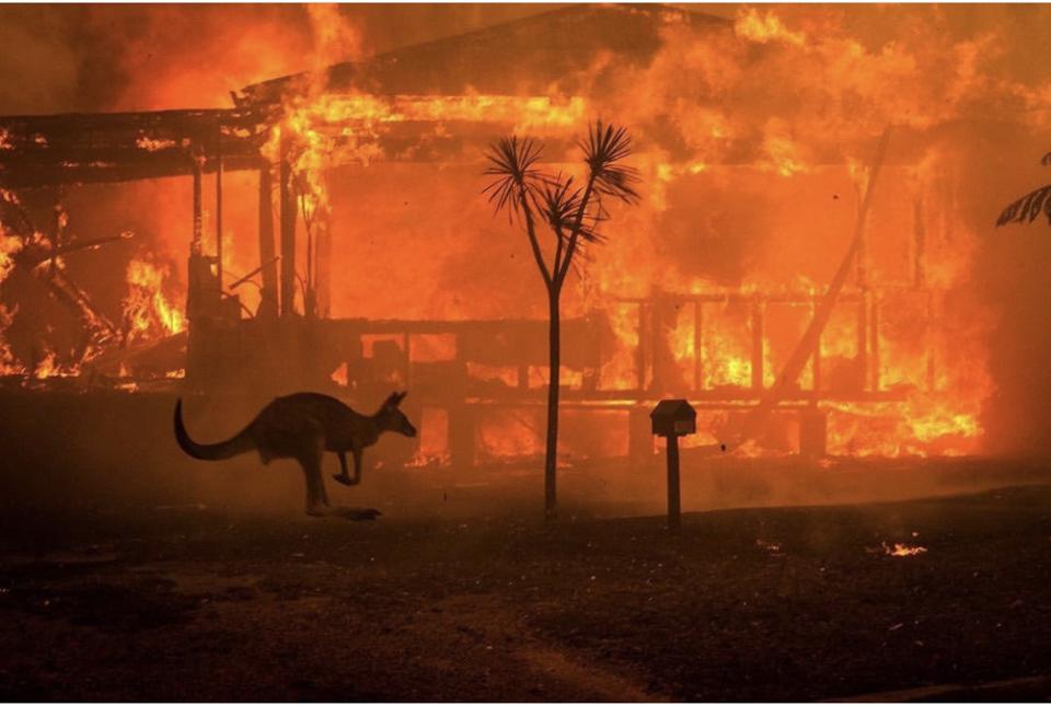 Purpose At Work: How Airbnb Supports Australia's Fire Victims