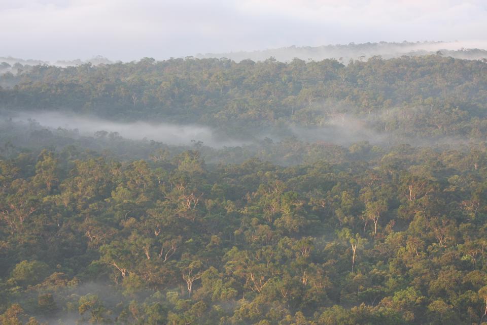 Isla de Peleng Hill Forest Philippe Verbelen sulawesi indonesia